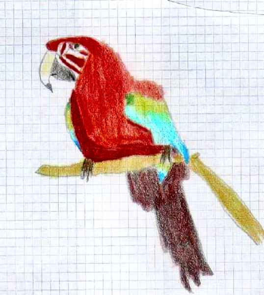 Dibujo Para Colorear Papagayo Dibujos Bonitos De Loros Latino Photo